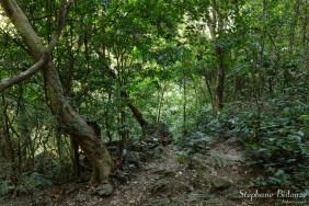 forêt-cat-ba-ile-vietnam-parc-national