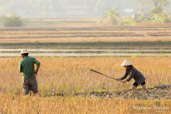 riziere-travail-vietnam