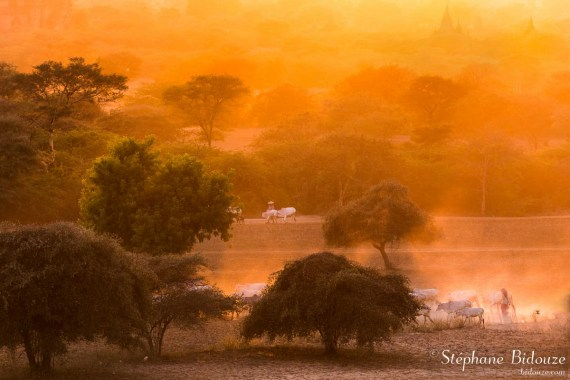 bergere-bagan-coucher-soleil