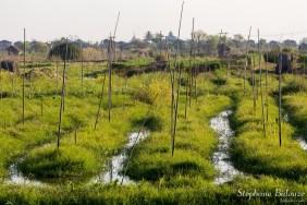 jardin-flottant-inle-lac