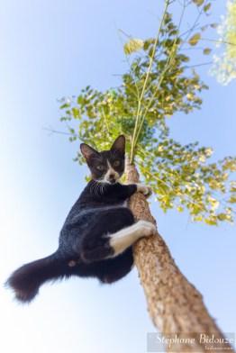 chat-arbre-grimpe