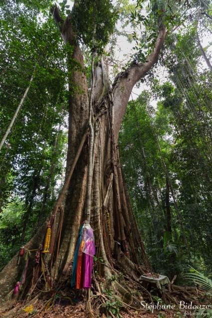 makka-arbre