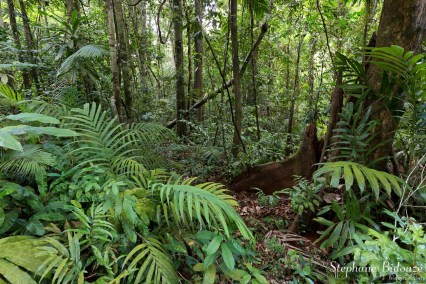 jungle-thailande