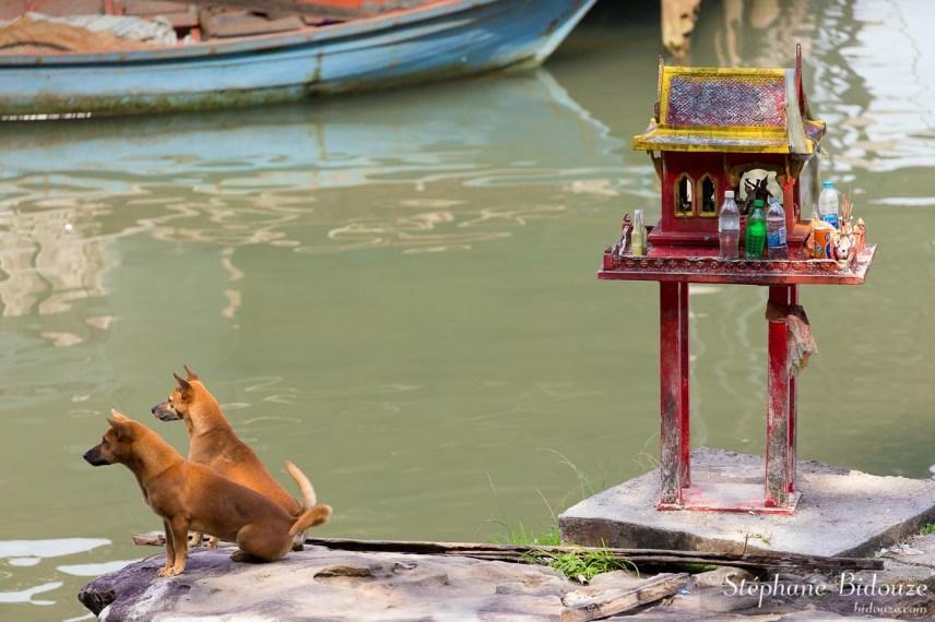 chien-maison-esprit-thailande