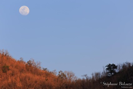 lune-thailande-colline-bambou