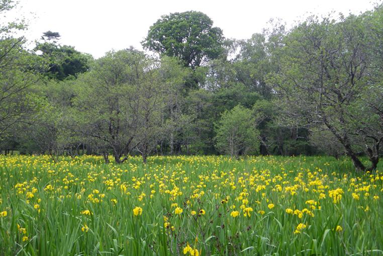 KILLARNEY-NATIONAL-PARK-IRLANDE-FLOWERS