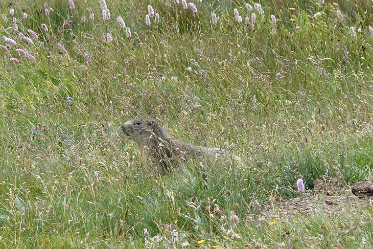 St-véran-plus-haute-commune-d'europe-et-les-marmottes-8
