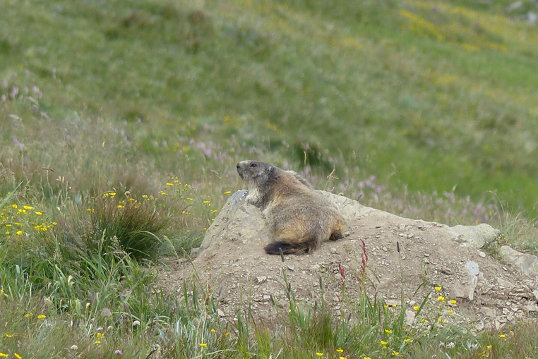 St-véran-plus-haute-commune-d'europe-et-les-marmottes-9