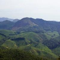 Çay tarlalarıyla ünlü yeşil Munnar