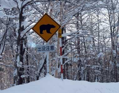 クマ出没注意!