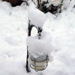 牡丹雪 【ぼたんゆき】