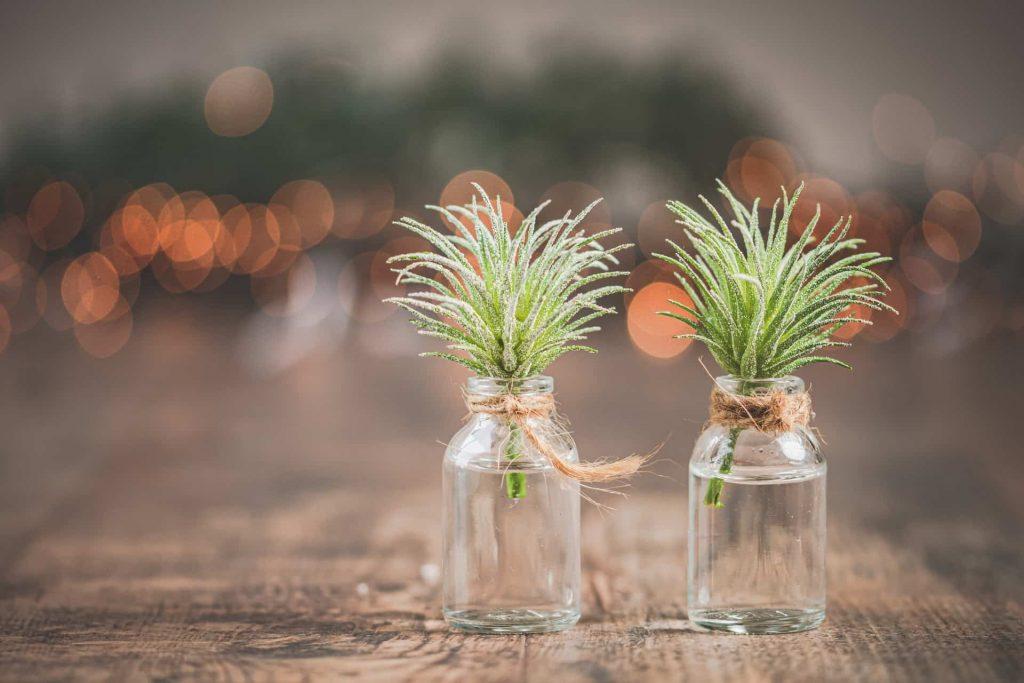 méditation pleine conscience : plantes zen