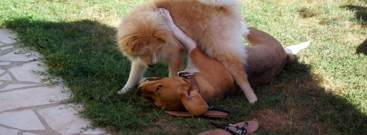rencontre avec des chiens