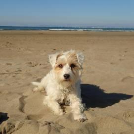 cours particuliers d'éducation canine