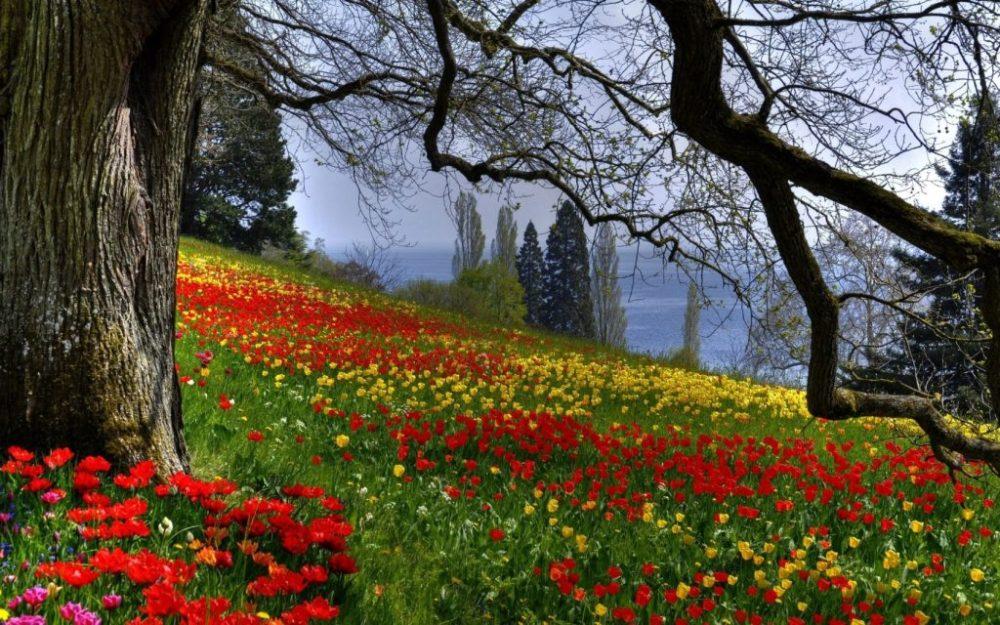 La relaxation par la visualisation d'un paysage (3/4)