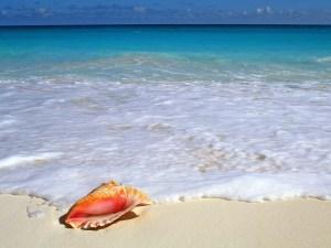 Layout sea