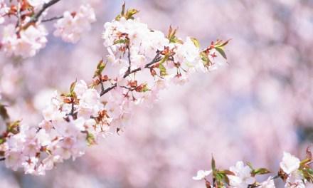 3 évènements inspirants pour célébrer le printemps