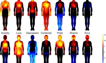 Cartographie physique des émotions – l'enquête finlandaise