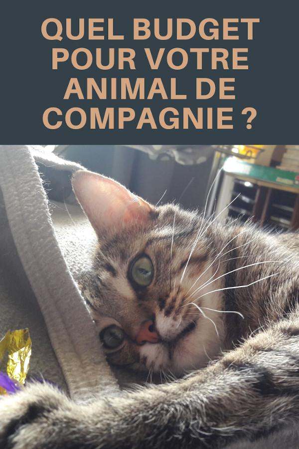 budget pour votre animal de compagnie