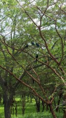 Birds of Senegal