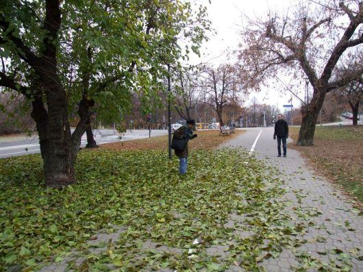 Warsawa_2011_listopad-b_01