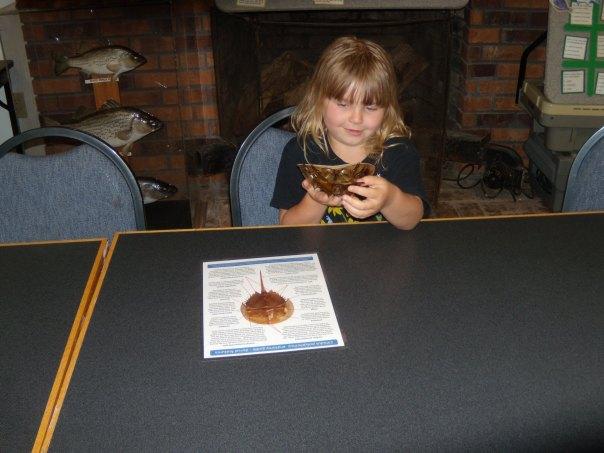 Mady with horseshoe crabs