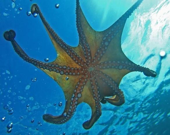 Big Blue Diving – Scuba diving in Bol Croatia
