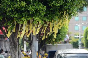 凱達格蘭大道上掛滿黃絲帶,呼籲台灣政府緊急營救鍾鼎邦。