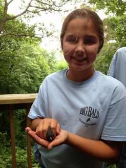 VBS student bands and releases a Slate-colored Junco