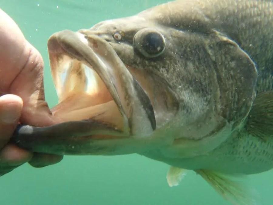 ガルダで釣ったロクマル