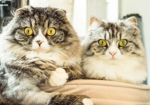 目を丸くする猫