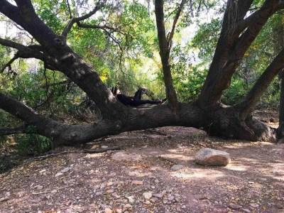 tie down tree