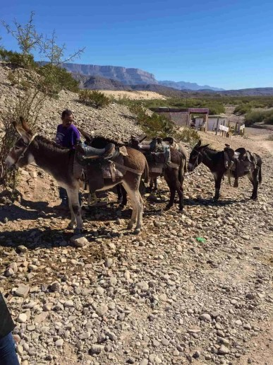 saddled up our donkeys and road to boquillas