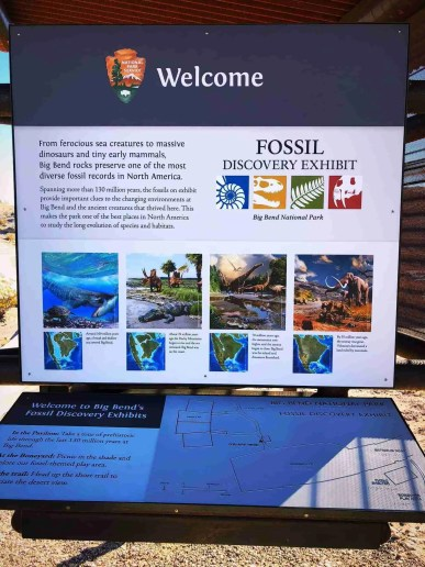 big bend national park fossil exhibit