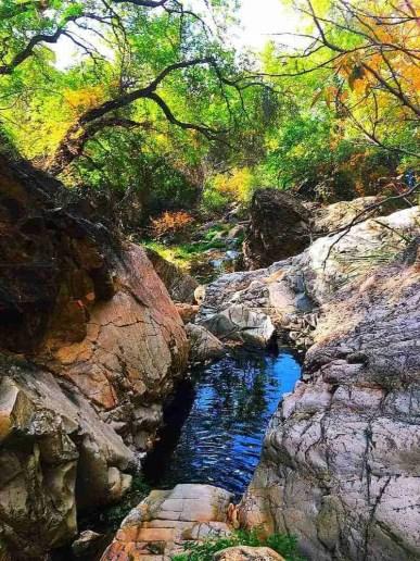 Secret Springs in Big Bend