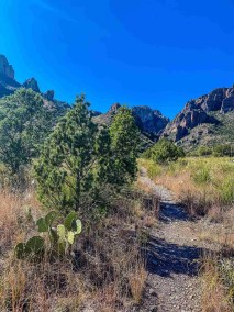 Pine Canyon Trail in Big Bend National Park