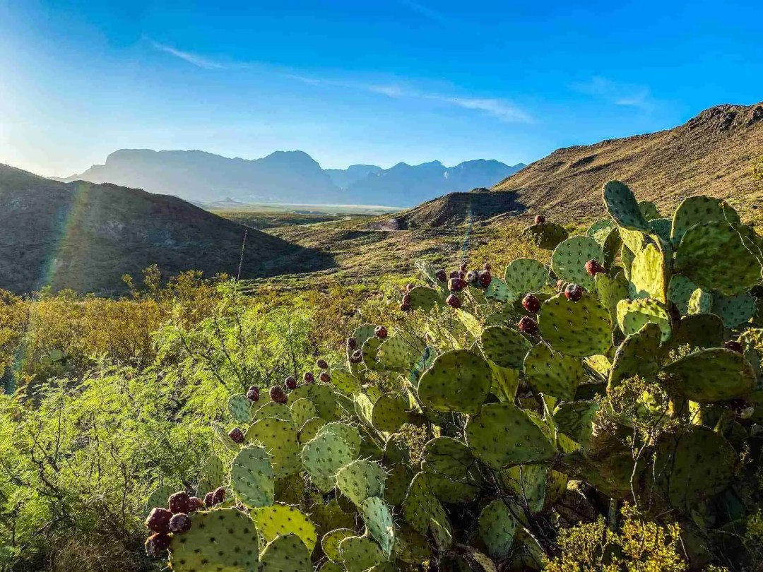 Big Bend and Chisos Mountains with Cactus