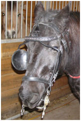 Bridle partially off, second crown holds it on