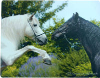Andalusians Horse Mouse Pad