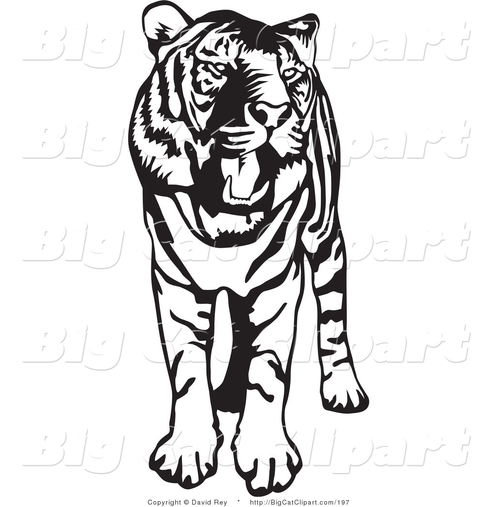 Big Cat Vector Clipart Of A Standing Black And White Tiger