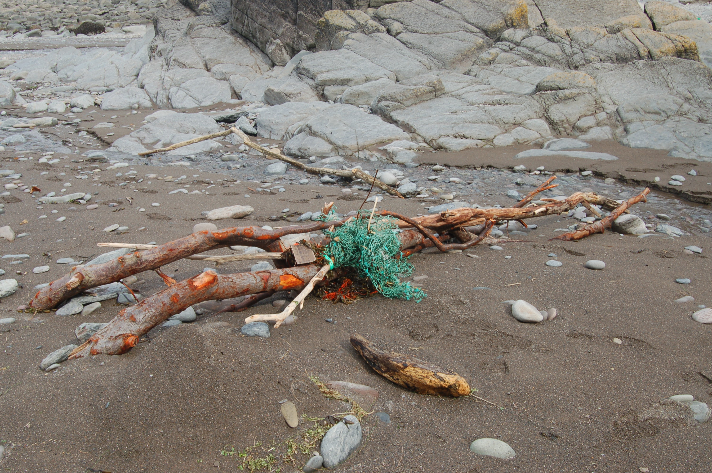 Colourful branch washed up at Lee Bay
