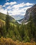 pine trees and lake