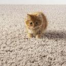 Удаляем запах кошачьей мочи с ковра