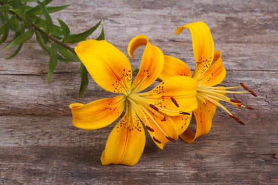 Как удалить цветочную пыльцу