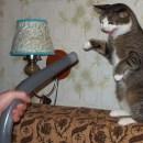 Советы для поддержки чистого дома с домашними животными