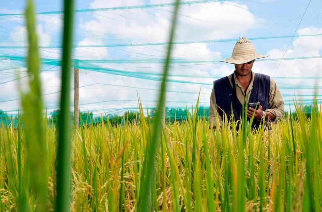 USAID case study highlights CIAT's data-driven agronomy work