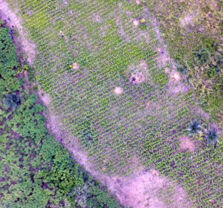 Mapping Maize using UAV Imagery