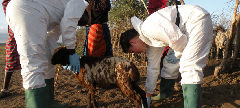 New study uncovers source of mystery neurological disease devastating Tanzanian sheep and goats