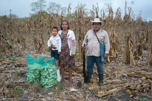 Machine learning for smarter seed selection to reduce risks for Mexican maize farmers