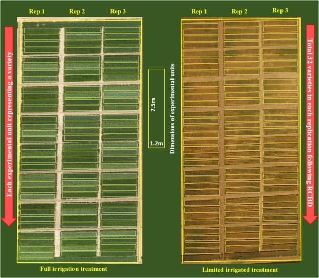 Predicting Wheat Yield using a Multi-Spectral UAV Platform